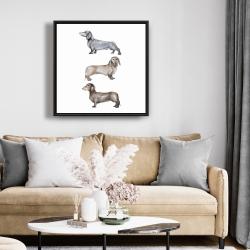 Framed 24 x 24 - Small dachshund dog