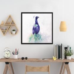 Framed 24 x 24 - Graceful peacock
