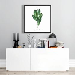 Framed 24 x 24 -  bay leaves bundle - fr