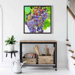 Framed 24 x 24 - Bunch of grapes