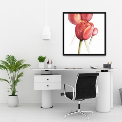 Framed 24 x 24 - Blossoming tulips closeup