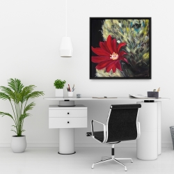 Framed 24 x 24 - Echinopsis red cactus flower