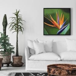 Framed 24 x 24 - Bird of paradise flower