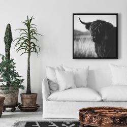 Framed 24 x 24 - Beautiful monochrome highland cow