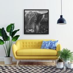 Framed 24 x 24 - Monochrome portrait highland cow