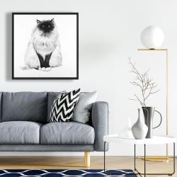 Framed 24 x 24 - Blue eyes fluffy siamese cat