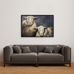 Framed 24 x 36 - Two sheeps