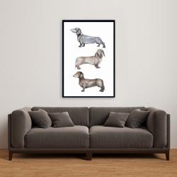 Framed 24 x 36 - Small dachshund dog