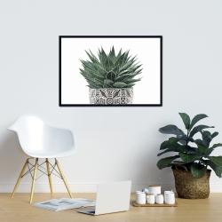 Framed 24 x 36 - Zebra plant succulent
