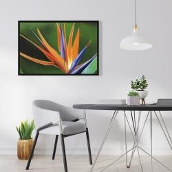 Framed 24 x 36 - Bird of paradise flower