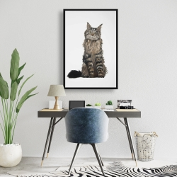 Framed 24 x 36 - Maine coon cat
