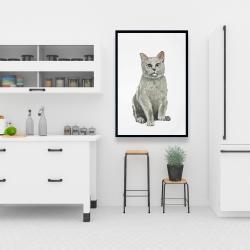 Framed 24 x 36 - British shorthair cat