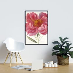 Framed 24 x 36 - Pink peony flower