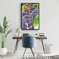 Framed 24 x 36 - Bunch of grapes