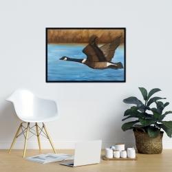 Framed 24 x 36 - Canada goose