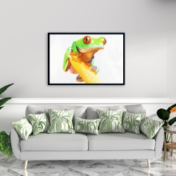 Framed 24 x 36 - Curious red eyed frog