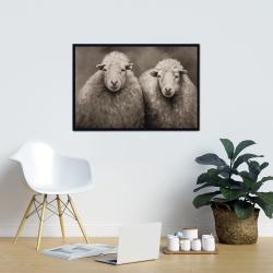Framed 24 x 36 - Sheep sepia