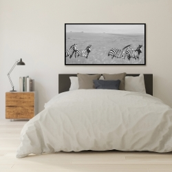 Framed 24 x 48 - Zebras in the savannah