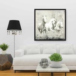 Framed 36 x 36 - Three white horses running