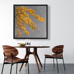 Framed 36 x 36 - Golden wattle plant