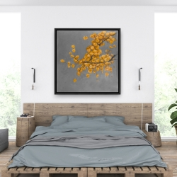 Framed 36 x 36 - Golden wattle plant with pugg ball flowers