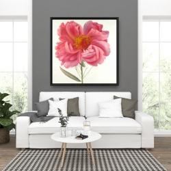 Framed 36 x 36 - Pink peony flower