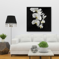 Framed 36 x 36 - Beautiful orchids