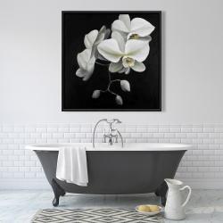 Framed 36 x 36 - White orchids