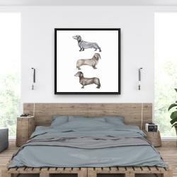 Framed 36 x 36 - Small dachshund dog