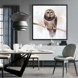 Framed 36 x 36 - Barred owl
