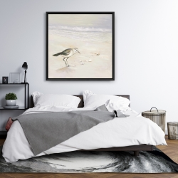 Framed 36 x 36 - Semipalmated sandpiper on the beach