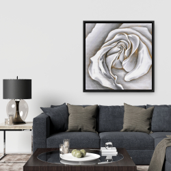 Framed 36 x 36 - White rose delicate