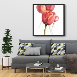 Framed 36 x 36 - Blossoming tulips closeup