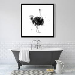 Framed 36 x 36 - Proud ostrich