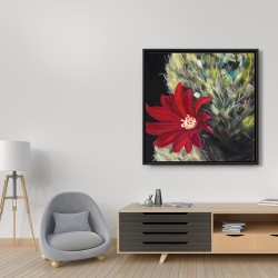 Framed 36 x 36 - Echinopsis red cactus flower