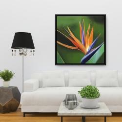 Framed 36 x 36 - Bird of paradise flower