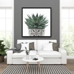 Framed 36 x 36 - Zebra plant succulent