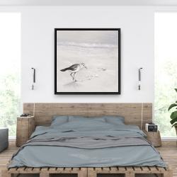 Framed 36 x 36 - Semipalmated sandpiper