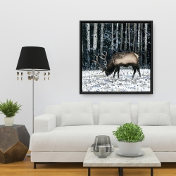 Framed 36 x 36 - Caribou in the winter forest