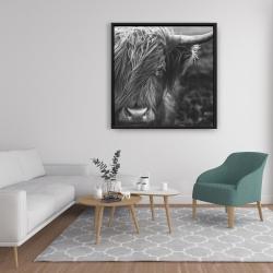 Framed 36 x 36 - Monochrome portrait highland cow