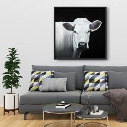 Framed 36 x 36 - White cow