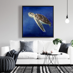 Framed 36 x 36 - Beautiful sea turtle