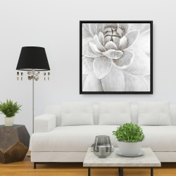 Framed 36 x 36 - Delicate white chrysanthemum