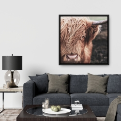 Framed 36 x 36 - Desaturated highland cow