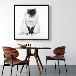 Framed 36 x 36 - Blue eyes fluffy siamese cat