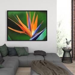 Framed 36 x 48 - Bird of paradise flower