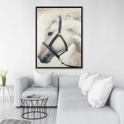 Framed 36 x 48 - Darius the white horse