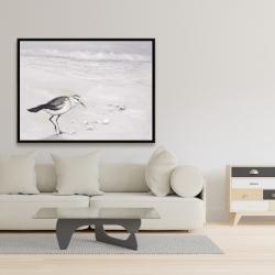 Framed 36 x 48 - Semipalmated sandpiper