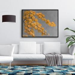 Framed 36 x 48 - Golden wattle plant