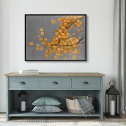 Framed 36 x 48 - Golden wattle plant with pugg ball flowers
